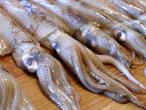 Close up shot of row of squid Royalty Free Stock Photo