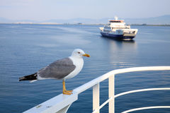 Close up shot of seagull and the ferryboat in Thassos, Greece Royalty Free Stock Photo