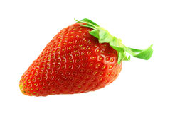 Close up shot of single fresh ripe strawberry Stock Images