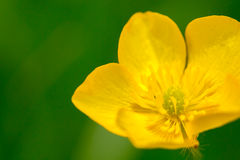 Close up shot of single yellow flower Stock Photography