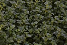 Close up shot of small leaves stock photography