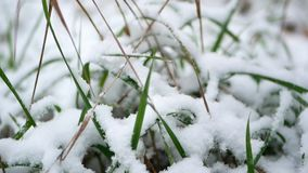 Close up snow grass. Close up shot of snow on a tiny blade of grass stock video