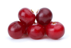 Close-up shot of some cranberries Stock Images