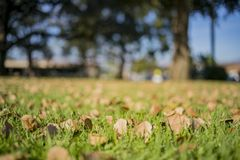 Close up shot of some leaves and grass field. At Temple City, California royalty free stock photos