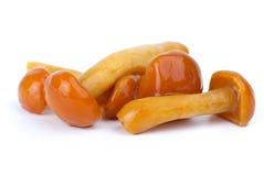 Close-up shot of some marinated honey agarics. Isolated on the white background Royalty Free Stock Images