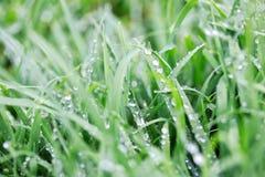 Wet Grass After Rain. A close up shot of some wet grass after rain Royalty Free Stock Photos