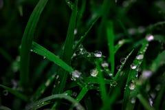 Wet Grass After Rain. A close up shot of some wet grass after rain Stock Photo
