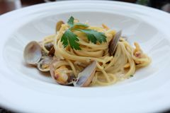 Spagetti white sauce with fresh clams. Close up shot of Spagetti white sauce with fresh clams Royalty Free Stock Image