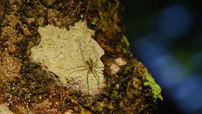 A close up shot of spider on tree. A macro shot of a spider on tree stock footage