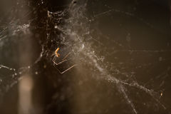 Close up shot of spiderweb Royalty Free Stock Image