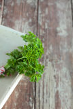 Close up shot of a sprig of flat head parsley Stock Photo