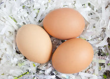 Close up Shot of Three eggs. Royalty Free Stock Image