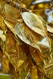 Close up shot of traditional Thai tree with golden leaf for donation in Chang Mai temple, Thailand. royalty free stock photography