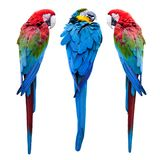 Three parrots stock photos