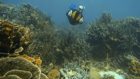 Diving underwater using sea scooters. A close up shot of two scuba divers wearing diving gear with a sea scooter stock footage