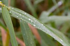 A close-up shot of water droplets on a reed in the sunshine royalty free stock image