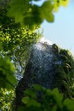 Close up shot of water drops waterfall, moss covered stone, crystal clean, nature background stock photo