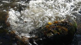 Close-up shot of water streams in a mountain creek with yellow and brown autumn leaves around. Day stock video