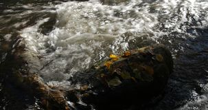 Close-up shot of water streams in a mountain creek with yellow and brown autumn leaves around. Day stock video footage