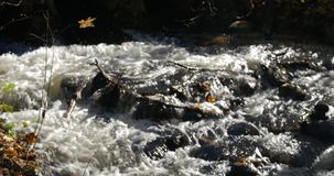 Close-up shot of water streams in a mountain creek with yellow and brown autumn leaves around. Day. Blurry image stock footage