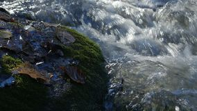 Close-up shot of water streams in a mountain creek with yellow and brown autumn leaves around. stock video
