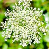 Close-up shot of white flower. Royalty Free Stock Image