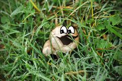 A close up shot of a white wild mushroom with cartoon eyes and tongue out. Through the morning dews in grass. Happy face mushroom royalty free stock image