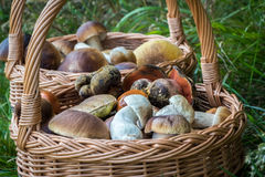 Close-up shot of wicker basket with mushrooms Stock Photography