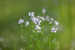 Close up shot of Wild flowers Royalty Free Stock Images