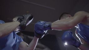 Close up shot of young male athlete boxer fighter personal coach practicing workout training hook punch kick boxing ring. Close up shot of young male athlete stock footage