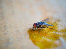 Close-up shots of flies stock images