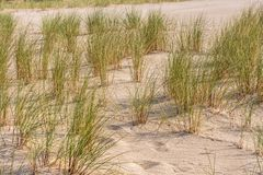 Baltic Sea beach with beach grass royalty free stock photography