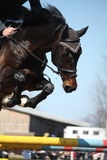 Close up of show jumping horse Royalty Free Stock Photos