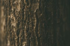 Close up showing the bark of a tree. Selective focus. royalty free stock photography