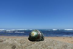 Close up showing shell on beach along the Great Ocean Road, Australia. Ocean in the background and perfect weather conditions stock photos