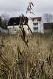 Close up from showing winter meadow in Denmark, with houses as backdrop. Close up on crop in a winter field by a lake in Denmark, Scandinavia, with blurred out Stock Photography