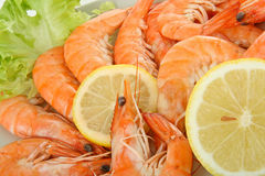 Close up on shrimp Royalty Free Stock Images