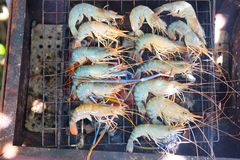 Shrimp grilled on bbq charcoal oven Royalty Free Stock Image