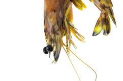 Close up shrimp isolated on white. Royalty Free Stock Photo