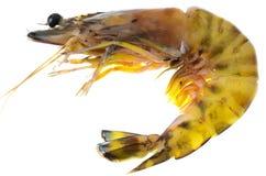 Close up shrimp isolated on white. Stock Image