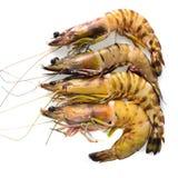 Close up shrimp isolated on white. Stock Photography