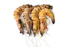 Close up shrimp isolated on white. Royalty Free Stock Images