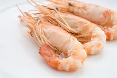 Close up of shrimps in white plate Royalty Free Stock Image
