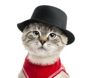 Close-up of a Siamese with red top and top hat, 5 months old Royalty Free Stock Photography