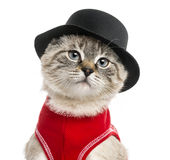 Close-up of a Siamese with red top and top hat, 5 months old Stock Photography