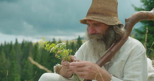The close-up side portrait of the senior traveller in old clothes smelling the field flowers. Mountains location. stock video footage