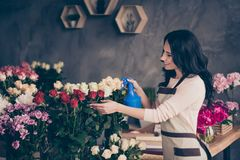 Close up side profile photo beautiful adorable she her lady many roses vases retail seller assistant hands arms check. Flowers condition pulverize water opening stock image