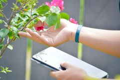 Close up side view of right hand touch flower and holding tablet computer on left hand. modern garden and internet online transact stock photo