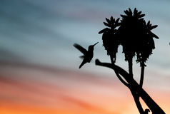 Close-up of Silhouette Bird Flying Against Sky Stock Photography