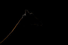 Close-up of silhouetted giraffe head and neck royalty free stock photography